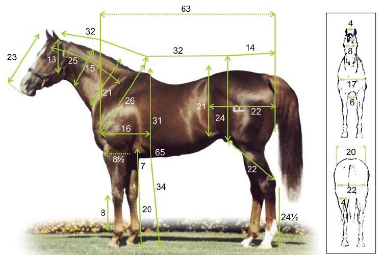 Treinamento Do Cavalo Quarto De Milha Pictures to pin on  ~ Wallpaper Quarto De Milha